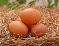 Place the eggs in a hay stack wood floors. Place the eggs farm in a hay stack wood floors Royalty Free Stock Photos