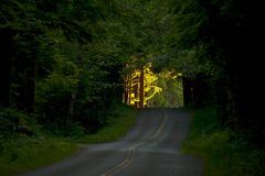 The Place of Hope. Bright, Sunny Future Ahead. Forest Road Horizontal Photography. Washington USA Stock Image