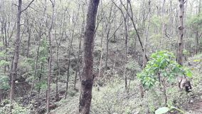 Parnera Hill forest in valsad Gujarat India `beauti of valsad`. This place is one  of the best beautiful places in south Gujarat  in India royalty free stock photography