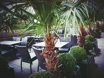 Place plants palm trees tables chairs. Wicker restaurant bar bistro green flower pots Stock Photography