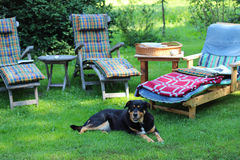 Place for relaxation. In the garden, dog is waiting Royalty Free Stock Images