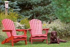 A place of rest with man's best friend Royalty Free Stock Photography
