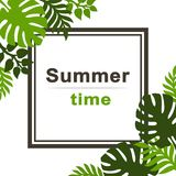 Summer tropical background with palm leaves. Stock Images