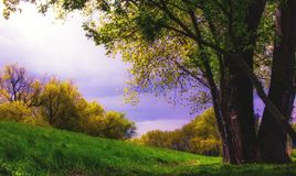 A PLACE TO RELAX . NATURE SCENERY. Summer nature scenery Stock Photos