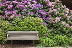 A Place to Rest. Bench with Rhododendrons in Full Bloom Royalty Free Stock Photography