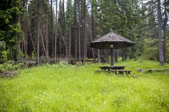 Place to rest in the woods. With green grass royalty free stock photos