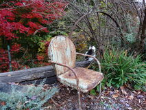 A Place to Think. Cat behind Wagon Wheel, Rusty Chair, Evergreens, and Red Maple Tree in Autumn Royalty Free Stock Photos