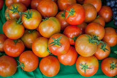 Place the tomatoes Stock Image