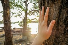 Placed on the trunk of a big tree with fingers extended, symbolizing the connection between humans and nature. Placed hand on the trunk of a big tree with stock photos