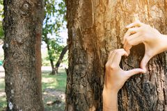 Placed on the trunk of a big tree with fingers extended, symbolizing the connection between humans and nature. Hug big tree Stock Photography