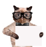 Placeholder banner cat Stock Images