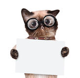 Placeholder banner cat. Royalty Free Stock Image