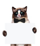 Placeholder banner cat. Stock Image