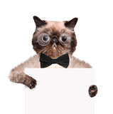 Placeholder banner cat Royalty Free Stock Images