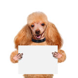 Placeholder banner dog Royalty Free Stock Images