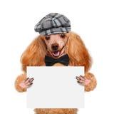 Placeholder sztandaru pies Zdjęcie Stock