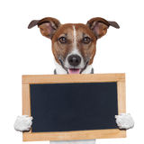 Placeholderbanerhund Fotografering för Bildbyråer