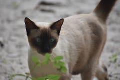 Placencia Belize fotografia stock libera da diritti