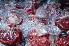 placenta bovina Imagens de Stock