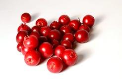 Placer av nya mogna tranbär eller lingon på vit royaltyfria foton