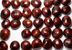 Placer of chestnut seeds in a row where there is an empty place. Placer of chestnut seeds in a row on a white background where one chestnut is missing, free Royalty Free Stock Photo