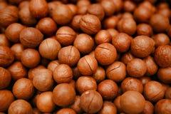 Placer de una de las nueces más valiosas del mundo - macadamia imagenes de archivo