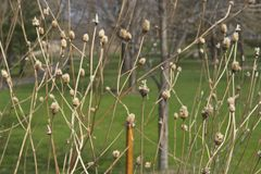 Placer del ` s de la primavera al inicio de un nuevo día Fotos de archivo