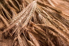Placer gold wheat ears on sacking. Location diagonal frame, close-up. Stock Photo