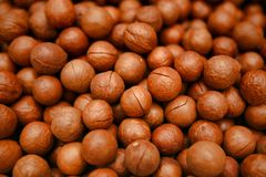 Placer of one of the most valuable nuts in the world - Macadamia. stock images
