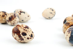 Placer quail eggs Stock Photo