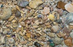 Placer shells Stock Photos