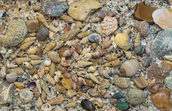 Placer shells. Shells are scattered various sizes Stock Photos