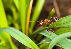 placera för myra Arkivfoto