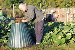 Placering av växtmaterial in i compostfack. Royaltyfri Bild