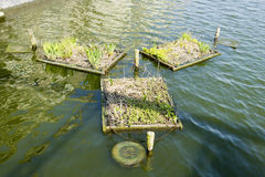 Places for nests on the canals of Amsterdam Royalty Free Stock Photo