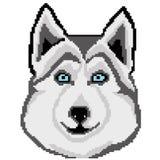 Places tirées de chien de traîneau de race de chien de museau, pixels Portrait de Husky Dog Illustration de vecteur illustration libre de droits