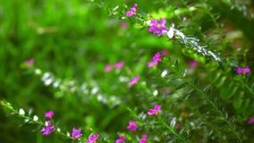 Placez 3 agrafes Surface d'herbe verte, branche de sapin et banque de vidéos