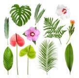 Placez avec de belles fleurs tropicales image stock