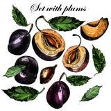Placez avec de belles prunes et feuilles mûres Photos stock