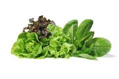 Placez avec de la salade de laitue sur le fond blanc images libres de droits