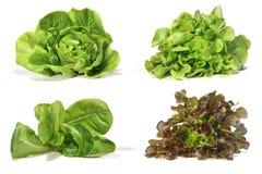 Placez avec de la salade de laitue sur le fond blanc image libre de droits
