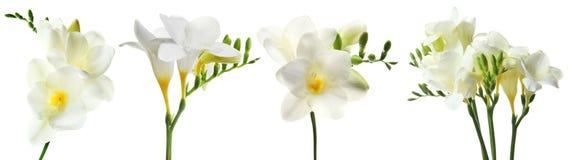 Placez avec des fleurs de freesia photos stock