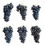 Placez avec des raisins mûrs juteux photos stock