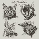 Placez avec différents chats de têtes Photos stock
