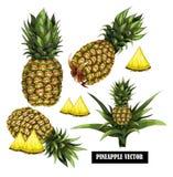 Placez avec l'ananas tiré par la main Illustration de vecteur Image stock