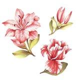 Placez avec les lis de floraison Illustration d'aquarelle d'aspiration de main Photographie stock