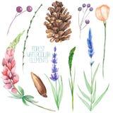 Placez, collection avec les éléments d'isolement de forêt d'aquarelle (baies, cônes, lavande, wildflowers et branches) Photos stock