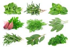 Placez de l'épice verte photo stock