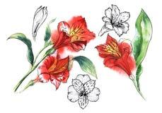 Placez de l'illustration de 5 éléments des fleurs d'Alstroemery illustration de vecteur