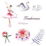 Placez de la ballerine peinte à la main d'aquarelle, cygnes, pivoines, brindille illustration stock